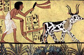 AGRICULTURA Y SUSTENTABILIDAD